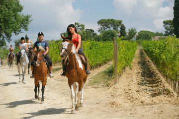 Cavalli Montefalco